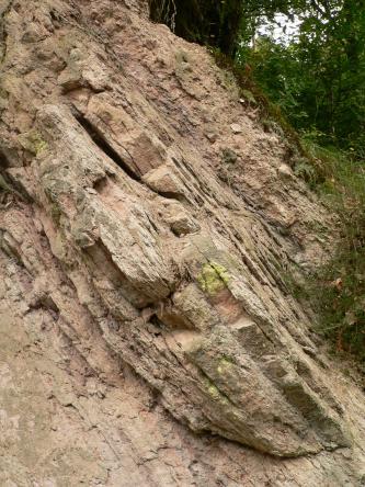 Aufschluss aus hellem, leicht rötlichem Gestein, welches stark verkippt ist und nach rechts unten steil einfällt. Im Hintergrund ist Wald zu erkennen.