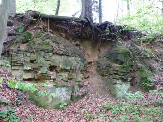 Aufgelassener, teilweise mit Moos überzogener Steinbruch im Wald. Das braune, leicht rötliche Gestein steht dünnbankig an.