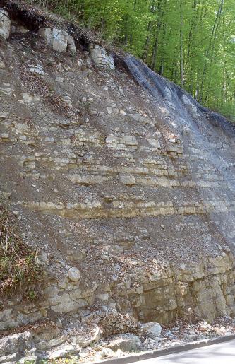Seitlicher Blick auf eine steile, nach links ansteigende Gesteinswand. Die leicht stufige, teilweise von Rutschmaterial bedeckte Wand ist das untere Ende eines Waldhanges. Das gelblich graue Gestein ist mit Netzen gesichert.