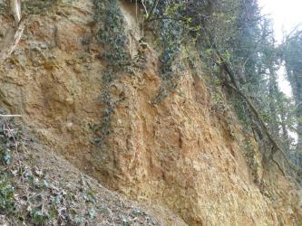 Das Bild zeigt einen mehrere Meter hohen Aufschluss. Es steht bräunliches bis rötliches Sediment an. Der Aufschluss ist leicht überwachsen.