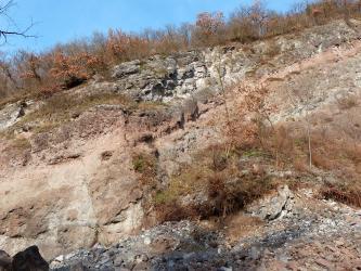 Blick auf eine von rechts oben nach links abfallende Steinbruchwand. Unter der bewachsenen Kuppe verläuft zunächst ein Band grauen Gesteins, dem rötliche und rötlich graue Bänke folgen. Im unteren Teil des Bildes liegt grauer bis rötlicher Schotter.