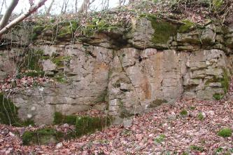 Blick auf eine alte Steinbruchwand an einem nach rechts aufsteigenden Waldhang. Das graue, zerklüftete Gestein ist bemoost und bewachsen. Davor und rechts liegt abgefallenes Laub.