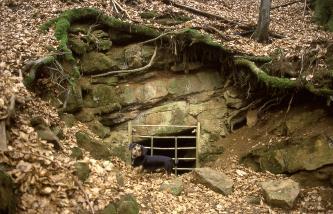 Unter einem leicht nach rechts geneigten, mit Laub bedeckten Waldhang befindet sich offenes Felsgestein. Das graue Gestein hat am unteren Ende, auf Höhe eines weiteren Hanges, eine vergitterte Öffnung. Vor dem Gitter ist ein Hund zu erkennen.