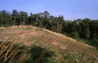Das Bild zeigt eine dreieckige Bodenerhebung, die nur dünn mit Gras und Sträuchern bewachsen ist. Den hinteren Rand der Erhebung bildet Wald.