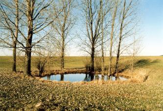 Das Bild zeigt eine mit Wasser gefüllte, ovale Vertiefung inmitten einer grünen, mit Laub bedeckten Senke. Die Wasserfläche ist von schlanken Bäumen umstanden.