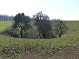 Auf einem großen grünen Hügel befindet sich in der Bildmitte eine trichterförmige Vertiefung, aus der ein paar Bäume emporwachsen.