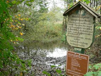 Blick auf einen von Bäumen und Sträuchern umgebenen, im Vordergrund schlammigen Tümpel. Rechts sind Schilder aufgestellt, die darauf hinweisen, dass der Besucher sich im Naturschutzgebiet Weingartener Moor befindet.