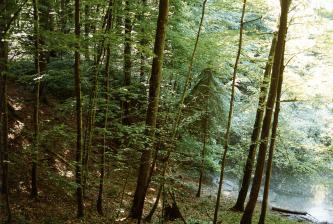Das Foto zeigt einen nach rechts abfallenden, schattigen Waldhang. Rechts unten, am sonnigen Rand des Hanges, ist ein Teil eines Gewässers zu erkennen.