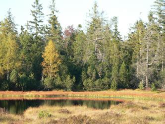 Auf dem Bild wird eine dunkle Wasserfläche von rötlich braunen Torfwiesen eingerahmt. Im Hintergrund steht ein Wald aus Laub- und Nadelbäumen.