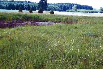 Blick über eine Wiese mit hohem Gras. Links im Bildmittelgrund ist ein schmaler Gewässerstreifen erkennbar. Im Hintergrund, angrenzend an weitere Grünlandflächen, erheben sich flache, bewaldete Hügel.