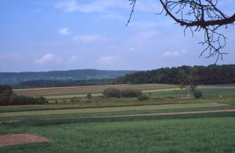 Hell und dunkel begrünte Feuchtflächen im Vordergund vor einigen Büschen. Am Horizont erhebt sich hinter einem kleinen Wald rechts im Bild ein bewaldeter Höhenrücken in den blauen Himmel.