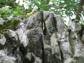 Nahaufnahme von grau-weißen, hochstehenden Felsspitzen, die wie Finger aneinander liegen. Links liegt etwas Moos auf dem Gestein.