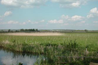 Blick auf eine weite Grasfläche mit Schilfstreifen. Im Vordergrund links steht Wasser an, rechts ist ein hölzernes Geländer zu sehen.