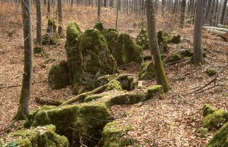 In der Bildmitte sind bemooste Felssäulen in einem Wald zu sehen. Der Waldboden ist mit braunem Laub bedeckt.