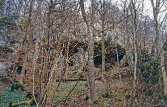 Blick auf den von zahlreichen schlanken Bäumen im Vordergrund fast verdeckten Eingang zu einer Höhle.