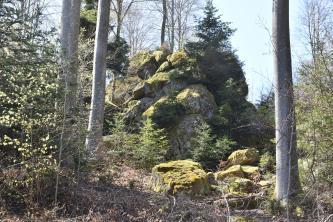 Blick auf eine aus mehreren Einzelfelsen zusammengesetzte Felsformation. Die Felsen stehen in einem Wald zwischen hohen Bäumen. Das Gestein ist teilweise gerundet und bemoost. Einzelne Stücke liegen auf dem Boden verstreut.