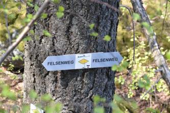 Zu sehen ist hier ein Wegweiser des Felsenweges. Er ist an einem Baumstamm befestigt. Das Schild zeigt in zwei Richtungen. In der Mitte ist eine gelbe Raute aufgedruckt.