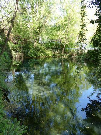 Blick auf eine von Bäumen umstandene Wasserfläche, die vom Laub der Bäume mehr grün als blau schillert.