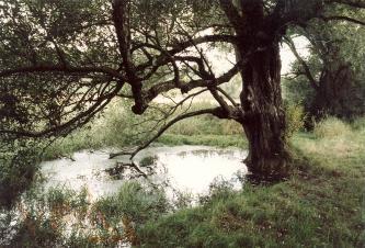 Neben einem knorrigen und stark verästelten Baum breitet sich eine kleine ovale Wasserfläche aus, die von Schilfgräsern und anderen Grünpflanzen eingesäumt wird.