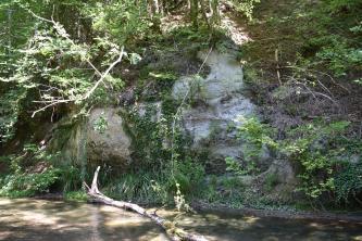 Blick auf den steilwandigen Uferbereich eines Flusses. In der Bildmitte schaut zwischen dichtem Bewuchs hellgraues Gestein hervor.