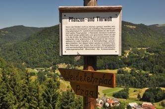 Das Bild zeigt eine hölzerne Informationstafel mit Hinweisen zur Pflanzen- und Tierwelt sowie einem Wegweiser zum Weidelehrpfad Präg. Im Hintergrund sind einzelne Häuser, Wiesen und bewaldete Berge erkennbar.