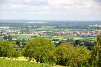 Blick von erhöhtem Standort über eine Baumgruppe auf eine flache Landschaft mit Wiesen, Äckern und Siedlungen. Im Hintergrund sind größere Waldflächen sowie eine größere Stadt zu erkennen.