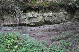 Unterhalb eines bemoosten, durchwurzelten Waldbodens zieht sich eine waagrecht gebankte Gesteinsreihe mit unterschiedlich großen, rechteckigen Blöcken. Darunter ein violetter, von Grünpflanzen durchsetzter Hang.