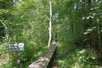Blick in einen dichten, von Buschwerk und dünnen Bäumen gebildeten Wald. Ein schmaler Weg aus Holzbohlen führt mitten in den Wald hinein. Links steht ein Warnschild.