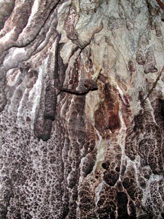 Blick auf eine Höhlenwand. Auf dem bleichen Gestein sind nach unten hin weißliche, wabenartige Ausbildungen zu erkennen.