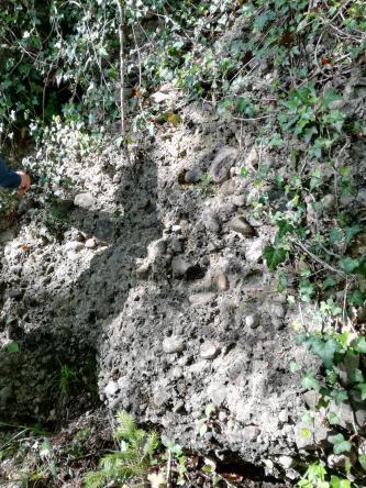 Blick auf eine hellgraue, an den Seiten zugewachsene Gesteinswand. Lose und teils eingebackene Steine bedecken die Wand.