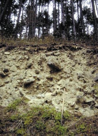 Das Foto zeigt eine steil aufragende Gesteinswand. Die bräunlich graue Oberfläche ist unregelmäßig und weist Vertiefungen, unten auch Bewuchs auf. Die Kuppe oben ist bewaldet.