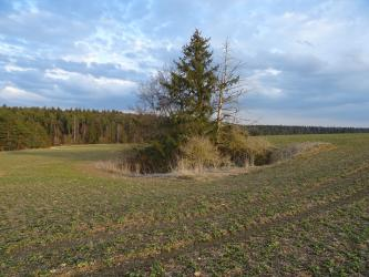 Zu sehen ist eine weite begrünte Ackerfläche, in deren Mitte sich eine trichterförmige Vertiefung befindet. Die Doline ist mit Gestrüpp und Bäumen bewachsen. Links wird der Acker bis zum Hintergrund von Wald begrenzt.