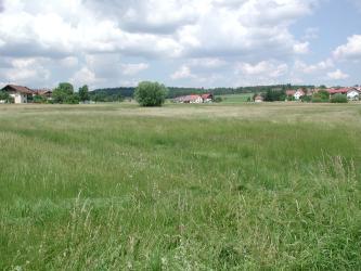 Blick auf eine hochstehende grüne Wiese, im Hintergrund begrenzt von ein paar Häusern. Dahinter sind noch flache, bewaldete Hügel erkennbar.