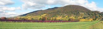 Panoramablick auf einen nach rechts hin ansteigenden und dann wieder abfallenden, bewaldeten Berg. Links, am Fuß des Berges, ist eine Burg zu sehen, rechts ziehen sich Rebstöcke den Hang hinauf. Im Vordergrund, auf einer Wiese, stehen ebenfalls Rebstöcke.