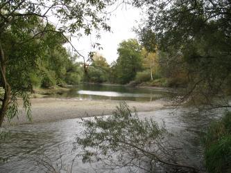 Man blickt durch Äste hindurch auf einen flachen, gewundenen Flusslauf. Links befindet sich eine Kiesbank, rechts säumen Bäume das Ufer.