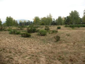 Karge Landschaft mit hellbraunem, sandigen Boden und vereinzelten Büschen und Bäumen.
