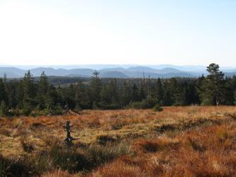 Blick über eine rötlich braune, hochgelegene Grasfläche auf einen breiten Streifen von Nadelwald. Im Hintergrund ferne bewaldete Bergrücken.