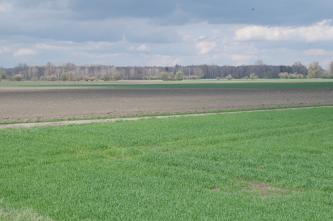 Wechsel von im Vordergrund liegender Grasfläche zu Äckern und Wiesen, die bis zu einem Wald im Hintergrund reichen. Davor verläuft noch eine Linie von Baumgruppen und Alleebäumen.
