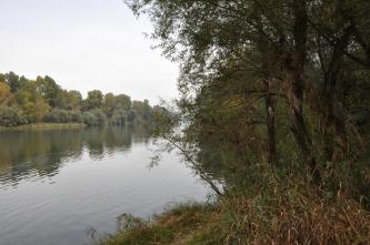 Blick auf einen breiten Flusslauf mit beidseitig dicht bewachsenem Ufer. Im rechten Bildteil ist das Ufer dem Betrachter näher. Bäume und Pflanzenwuchs füllen den gesamten Vordergrund aus.