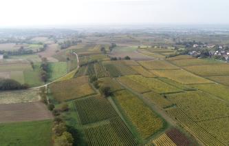 Luftaufnahme einer durch mehrere grüne Felder gekachelte Landschaft. Vereinzelt befinden sich dazwischen kleine Baumgruppen. Am rechten hinteren Bildrand ist eine Siedlung zu erkennen.