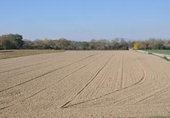 Blick auf hellbraune bis graue, unterschiedlich gefurchte Ackerflächen. Links und rechts, daran angrenzend, liegen Wiesen. Im Hintergrund verläuft ein Waldstreifen.