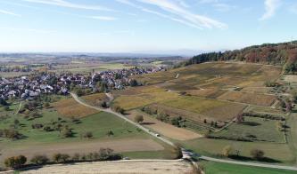 Unter einem blassblauen Himmel breitet sich eine flachhügelige Landschaft mit Wiesen, Feldern und einer Siedlung aus. Im rechten Bildteil sind außerdem Rebanlagen zu sehen, die sich einen oben bewaldeten Hang hinaufziehen.
