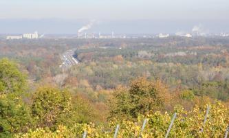 Über hochstehende Rebstöcke und Baumwipfel blickt man über eine weite Waldlandschaft, die links von einer mehrspurigen Straße durchschnitten wird. Im Hintergrund Industrieanlagen und rauchende Schornsteine.