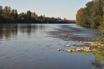 Blick auf einen breiten Fluss mit beidseitig bewaldeten Ufern und einer Autobrücke im Hintergrund. Der Wasserstand scheint niedrig, da auf der rechten Uferseite Steine vom Flussbett sichtbar werden.