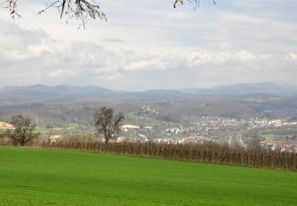 Blick über eine grüne Wiesen- oder Ackerfläche und angrenzenden Rebstöcken auf eine waldreiche, hügelige und bergige Landschaft mit Siedlungen in der vorgelagerten Ebene. Im Bildmittelpunkt liegt eine große Burgruine, die sich auf einem der Hügel erhebt.