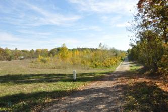 Links eines bewaldeten Weges breitet sich ein Damm mit Wiese und jungem Baumbestand aus. Im Vordergrund liegen die Schatten von Bäumen auf Wiese und Weg.