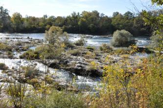 Blick auf einen sehr breiten Fluss, in dessen Fließrichtung zahlreiche Felsplatten liegen, die teilweise auch mit Sträuchern und Bäumen bewachsen sind. Im Hintergrund, am Flussufer, Wald. Im Vordergrund ragt Gebüsch ins Blickfeld.