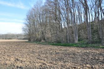 An einen umgepflügten Acker im Vordergrund schließt sich rechts eine bewaldete Böschung an. Die schlanken, hohen Bäume haben noch keine Blätter, der Acker wirkt staubig und trocken.
