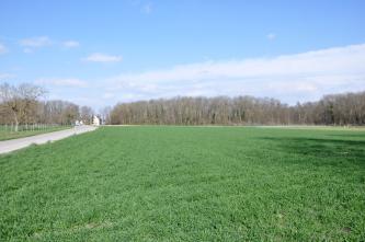 Die Aufnahme zeigt flache grüne Ackerflächen, im Hintergrund begrenzt von Auenwald.