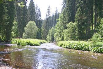 Die sich gabelnden Ufer eines Flusses im Vordergrund sind dicht von wuchernden Grünpflanzen bedeckt. Darüber erheben sich niedrige Laubbäume sowie hochstehende Fichten.